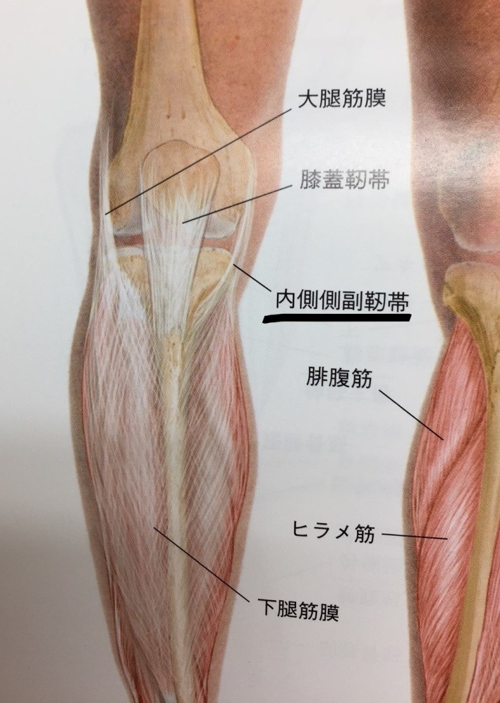 裏 腓腹筋 膝 の 痛み